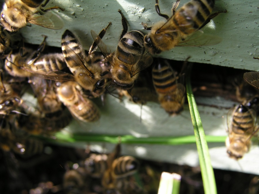 Homes Sometimes Need Bee Removal Orange County Services