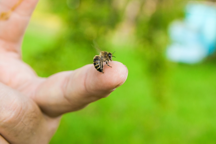 Orange-County-Residents-Need-Bee-Removal