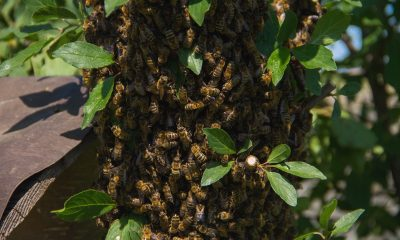 Bee-Removal-Pros-In-Orange-County-Can-Help-With-Your-Infestation