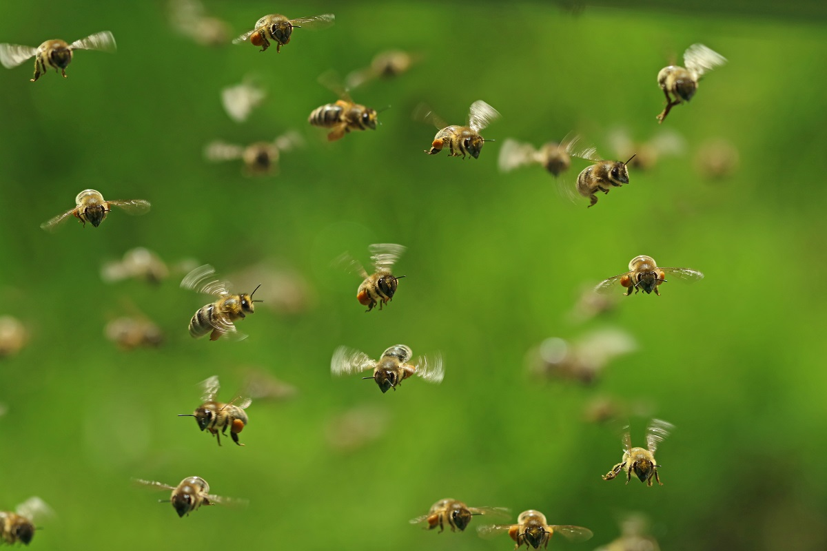 Orange-County-Calls-The-Professionals-When-They-Need-Bee-Removal