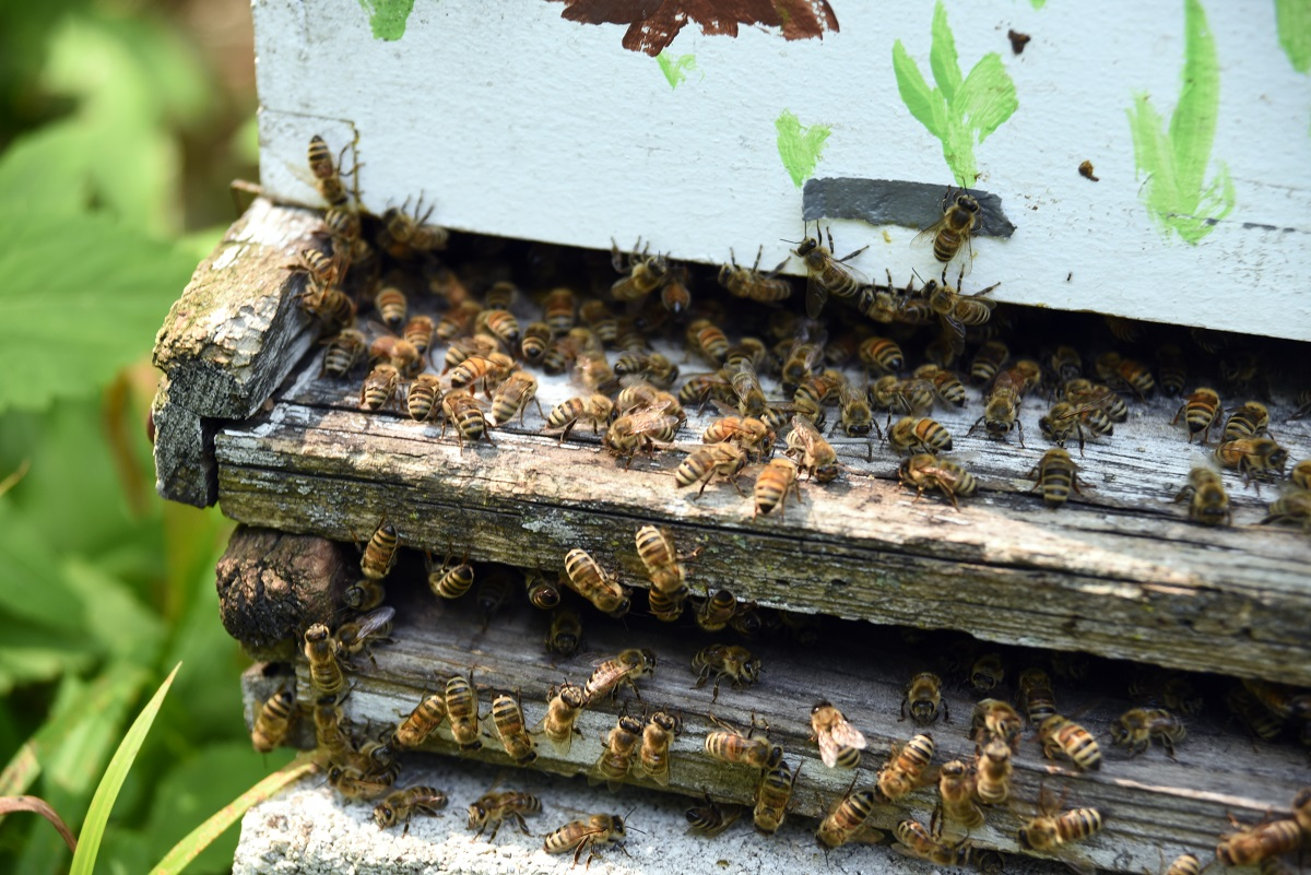 Orange-County-Must-Look-Into-Bee-Removal