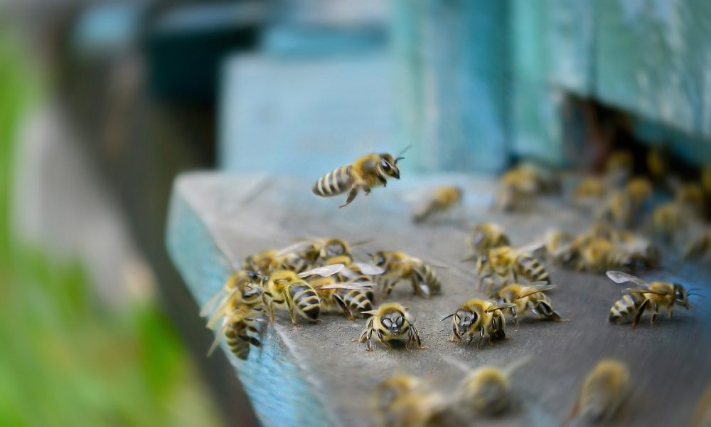 Orange-County-Residents-Sometimes-Need-Bee-Removal