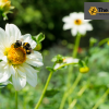 Bee-removal-orange-county-gives-advice-on-dealing-with-bees