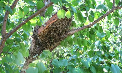 Bee-Removal-Orange-County-Can-Be-Challenging
