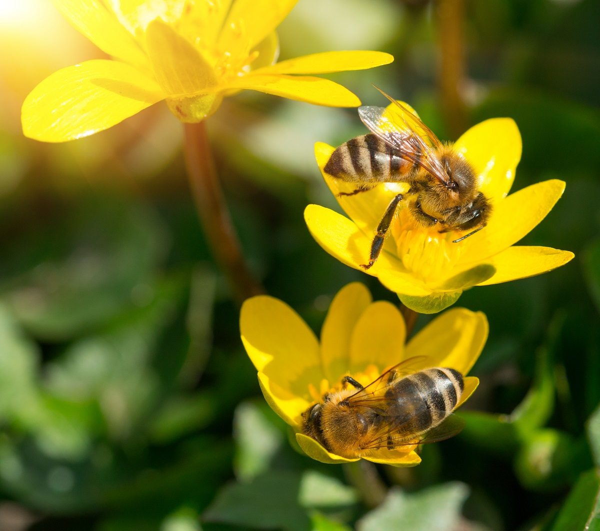 Orange-County-Bee-Removal-Is-A-Hard-Task