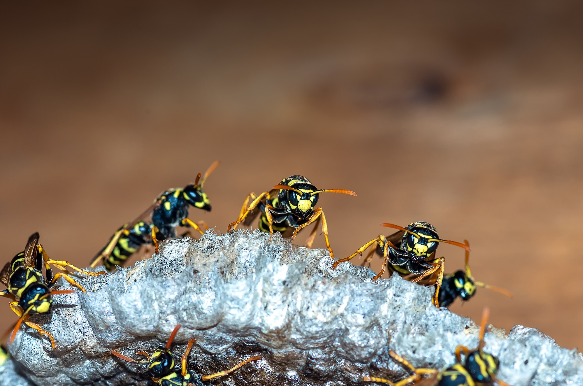 Wasp-and-Bee-Removal-In-Orange-County-Is-Not-An-Easy-Job