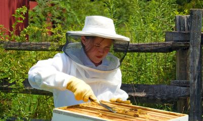 Avail-Bee-Removal-Services-in-Orange-County-For-your-safety