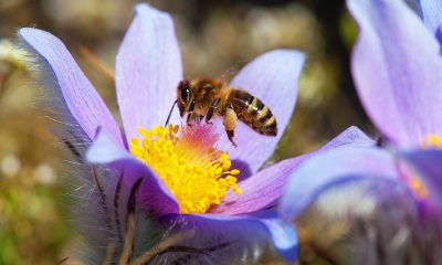 Bee-Removal-Service-Providers-In-Orange-County-Can-Protect-the-bees