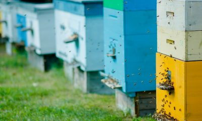 Bee-Removal-Service-Providers-Orange-County-Can-Tell-You-What-It-Takes-To-Create-a-Bee-Hotel