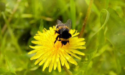 Bee Removal Services Orange County Is A One-Stop Bee Solutions
