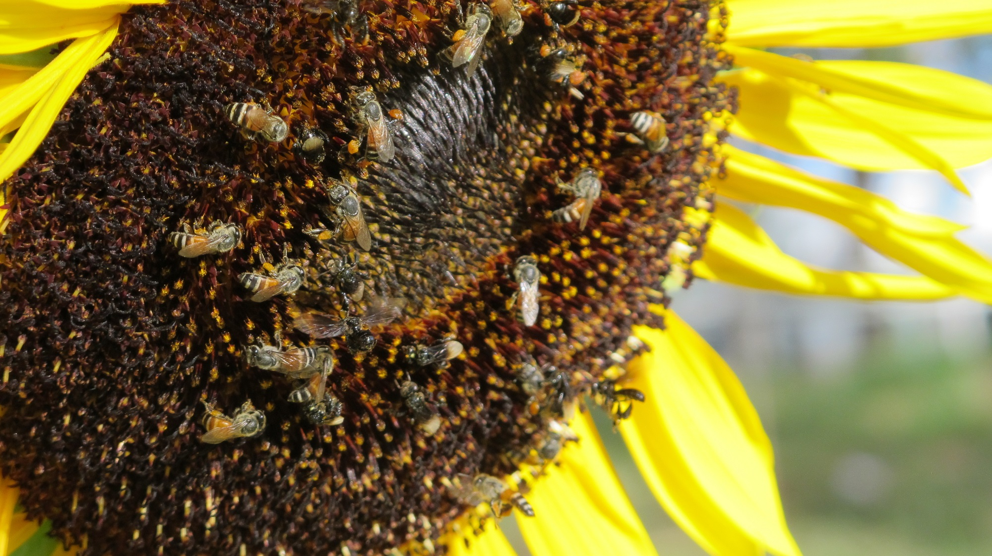 Bee-Removal-Professionals-In-Orange-County-Also-Help-The-Bees