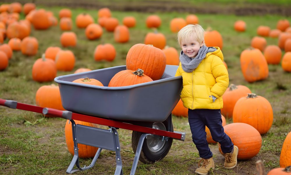 Know-What-Orange-County-Events-To-Attend-While-Visiting-Orange-County-In-The-Fall-Season