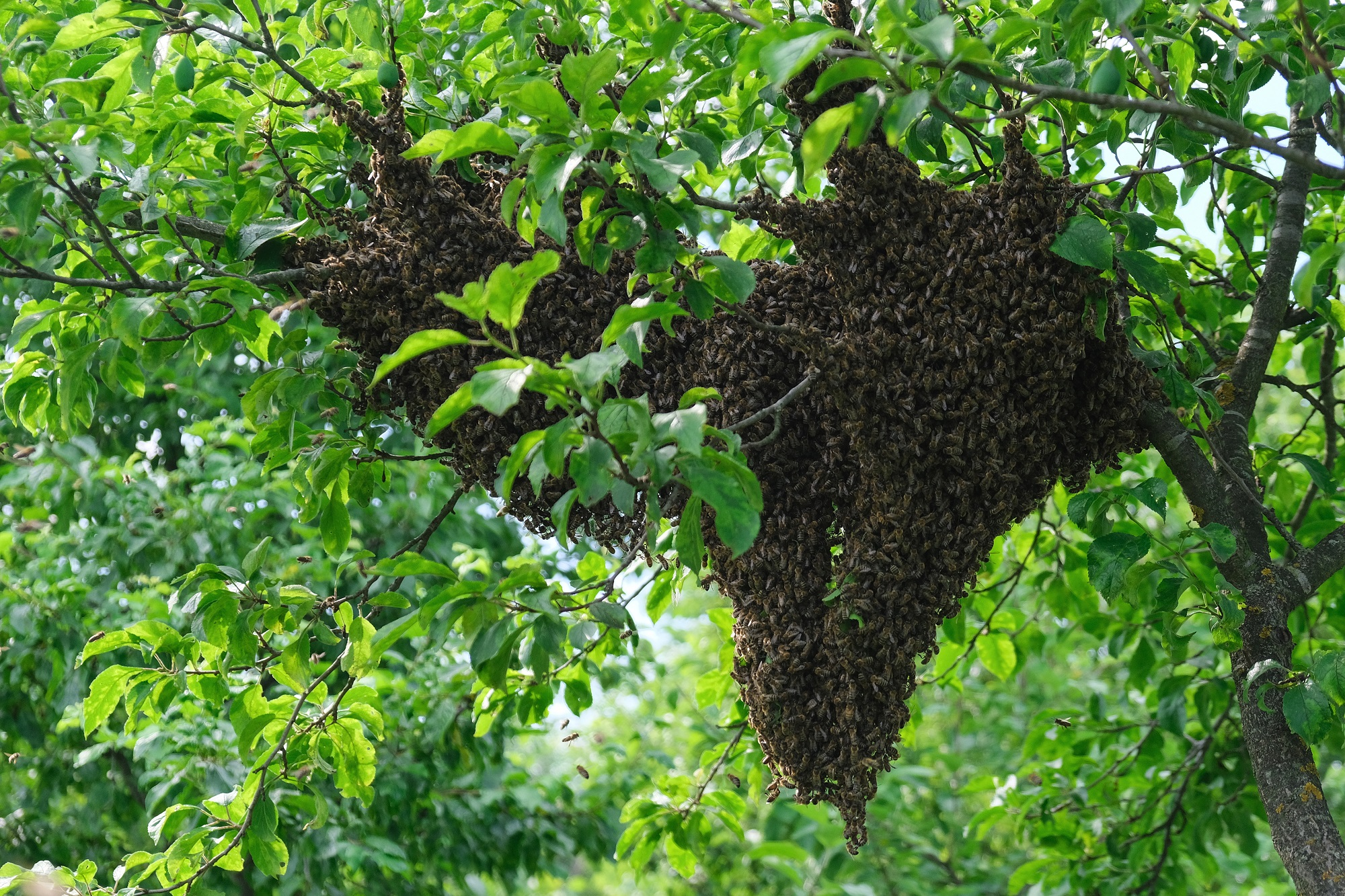 You-Can-Get-Awesome-Tips-And-Tricks-For-Bee-Removal-In-Orange-County