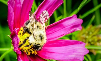 Tustin Toyota Service >> Here's Everything About Bee Removal in Orange County You ...