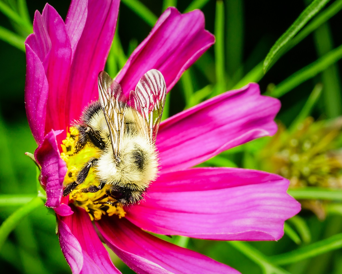 Ask-Orange-County-Bee-Removal-Professionals-How-to-keep-bees-safe
