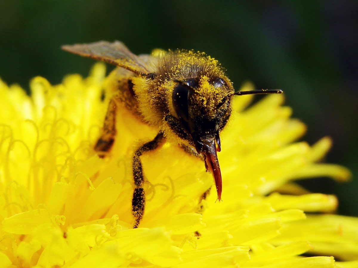 Ask-Orange-County-Bee-Removal-Professionals-for-facts-about-bees
