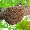 Perform-Bee-Removal-In-Orange-County-Safely-and-Effectively