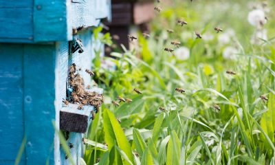 6-Natural-Bee-Removal-Tips