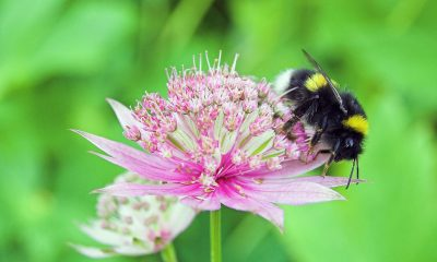 Discriminating-Bees-Can-Be-Critical-For-Bee-Removal-In-Orange-County