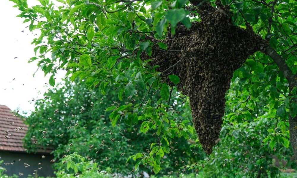 You-Need-Expert-Bee-Removal-In-Orange-County-To-Prevent-Bee-Home-Invasion