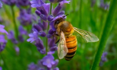 Best-Way-to-Accomplish-Bee-Removal-in-Orange-County