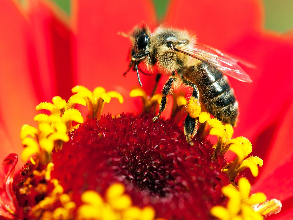 Listen-to-Bee-Removal-Orange-County-Experts-When-Treating-Your-Bee-Sting