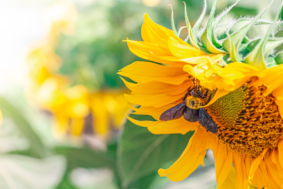 Trust-Bee-and-Wasp-Removal-Services-for-Your-Springtime-Needs
