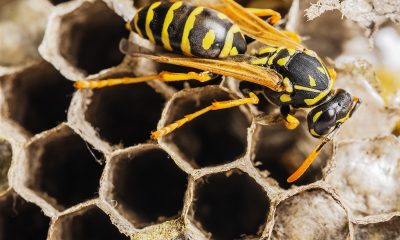 Contact A Bee And Wasp Removal Company Especially during summer