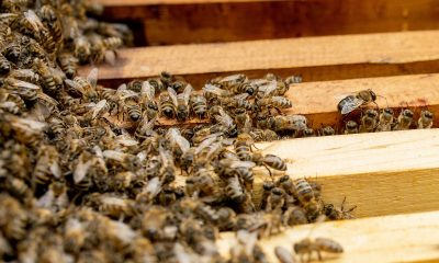Orange-County-Bee-Removal-Experts-Put-Safety-First
