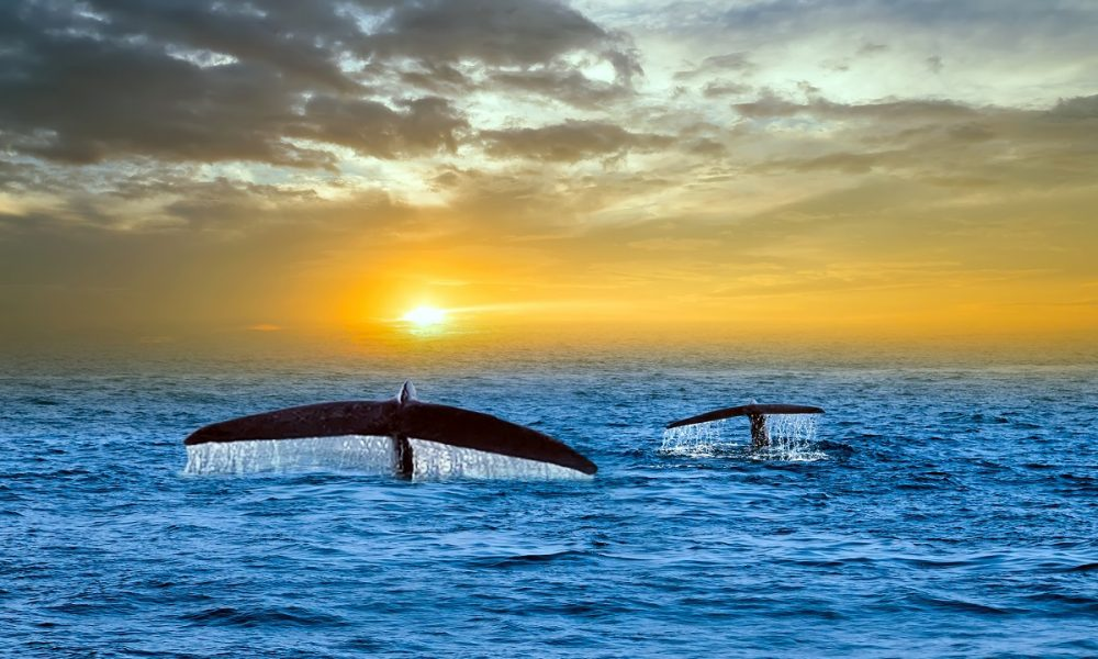 Encounter-the-Many-Animals-That-Live-in-Our-Oceans-at-Orange-County-Events-Like-Whale-Watching-Tours-in-Newport-Beach