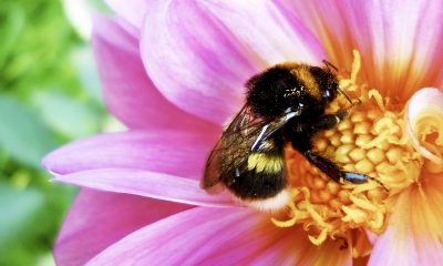Different-types-of-bees-and-wasps-and-how-to-identify-them