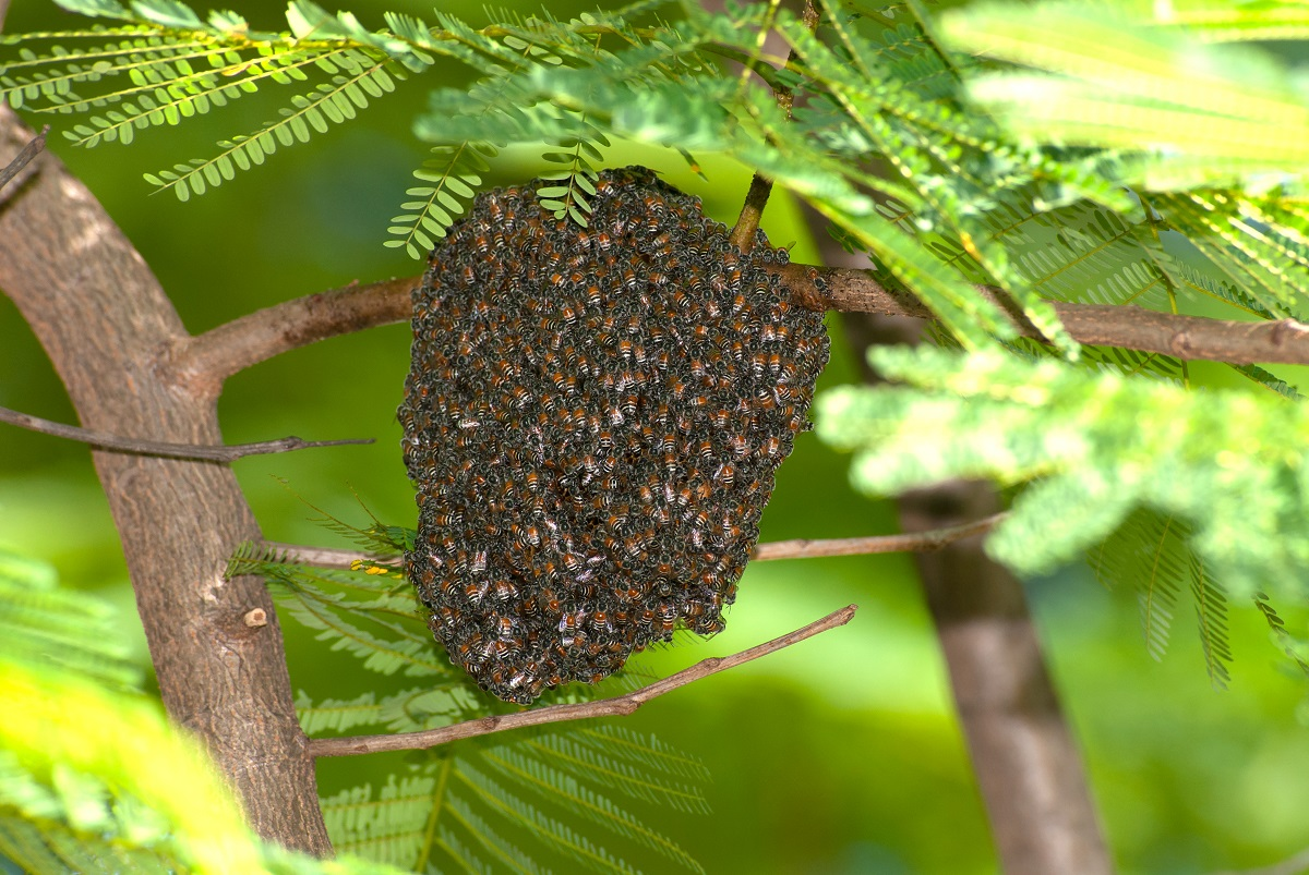 Trust-Bee-Removal-to-the-Experts