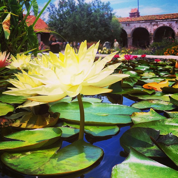 things-to-do-in-Orange-County-Go-To-Mission-San-Juan-Capistrano
