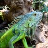 Why-going-to-The-Reptile-Zoo-is-one-of-the-best-things-to-do-in-Orange-County